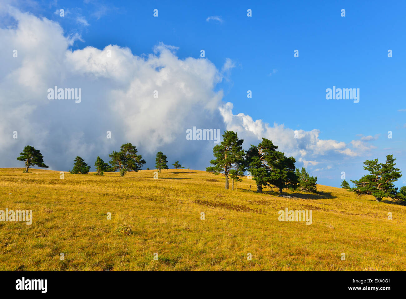 Summer highland in sunny weather. - Stock Image