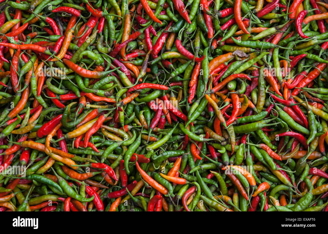 Seafood chili are exposed in the streets of Darjeeling, this drug assim with spices is produced in India and exported, - Stock Image