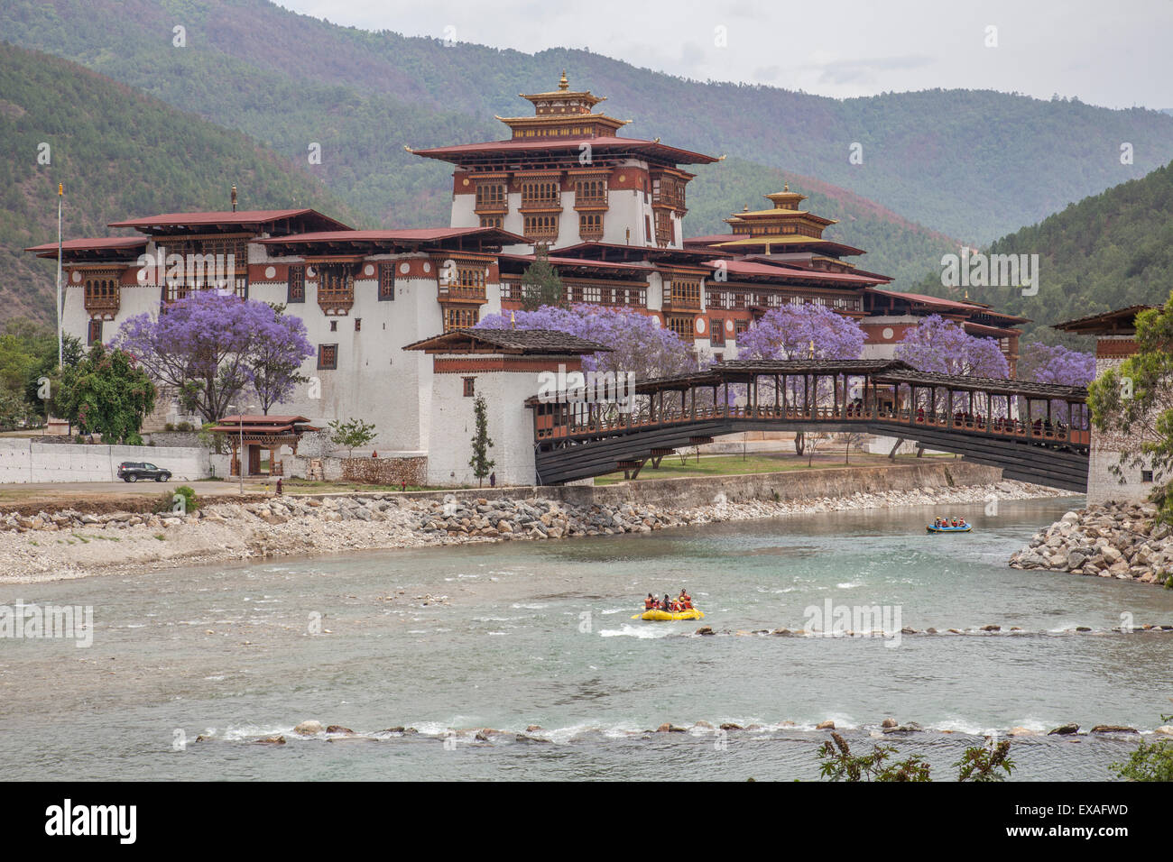 Rafting in the River Mo Chhu flowing near the Punakha Dzong where bloom the Jacaranda trees, Bhutan, Asia - Stock Image
