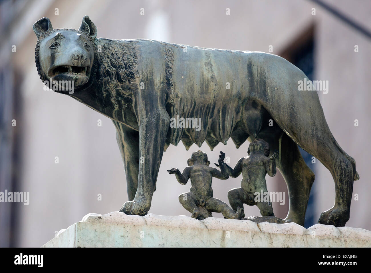 Bronze sculpture of the she-wolf with Romulus and Remus, Rome, Lazio, Italy, Europe - Stock Image