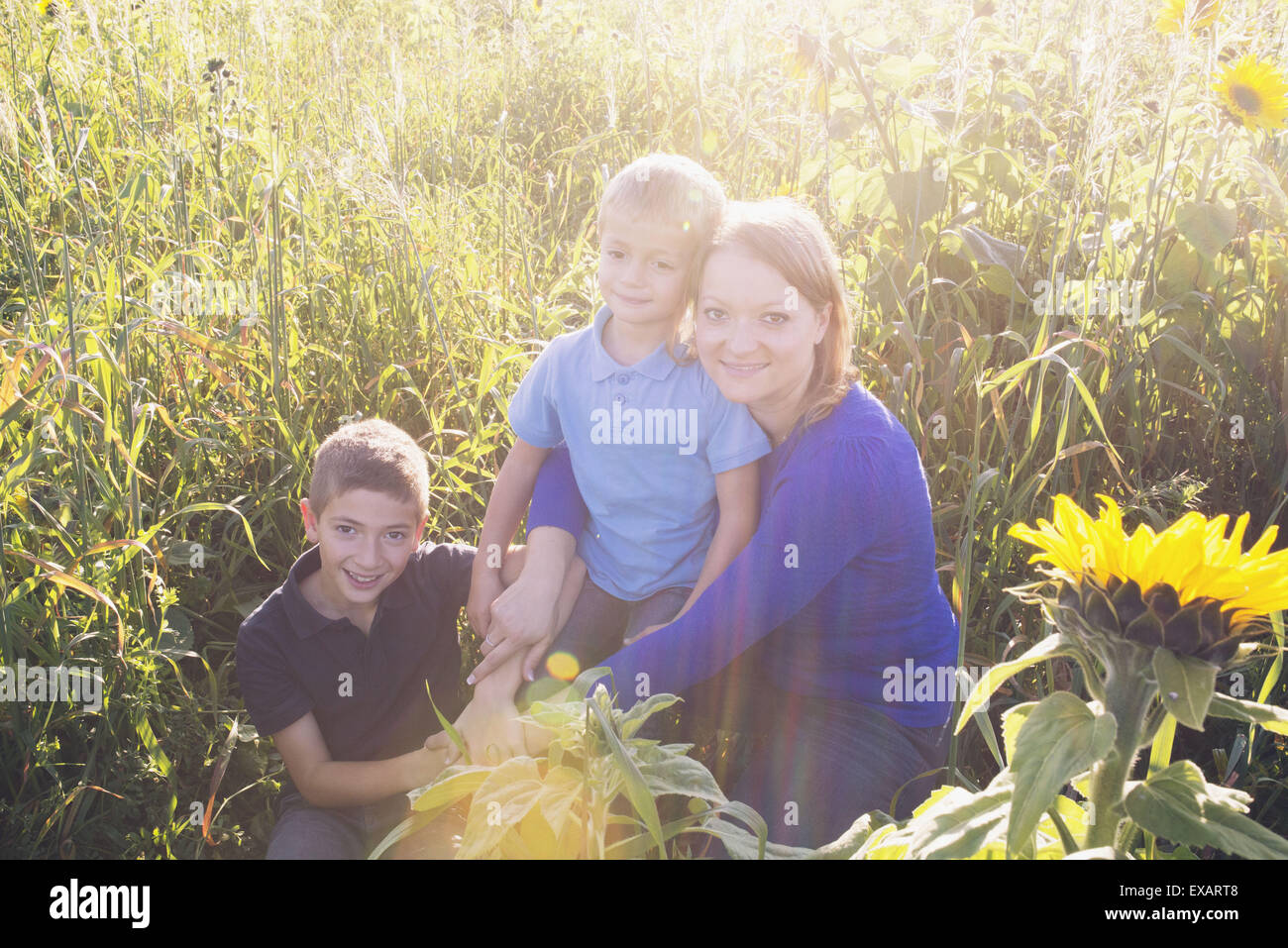 Mother and young sons together in field of sunflowers, portrait - Stock Image