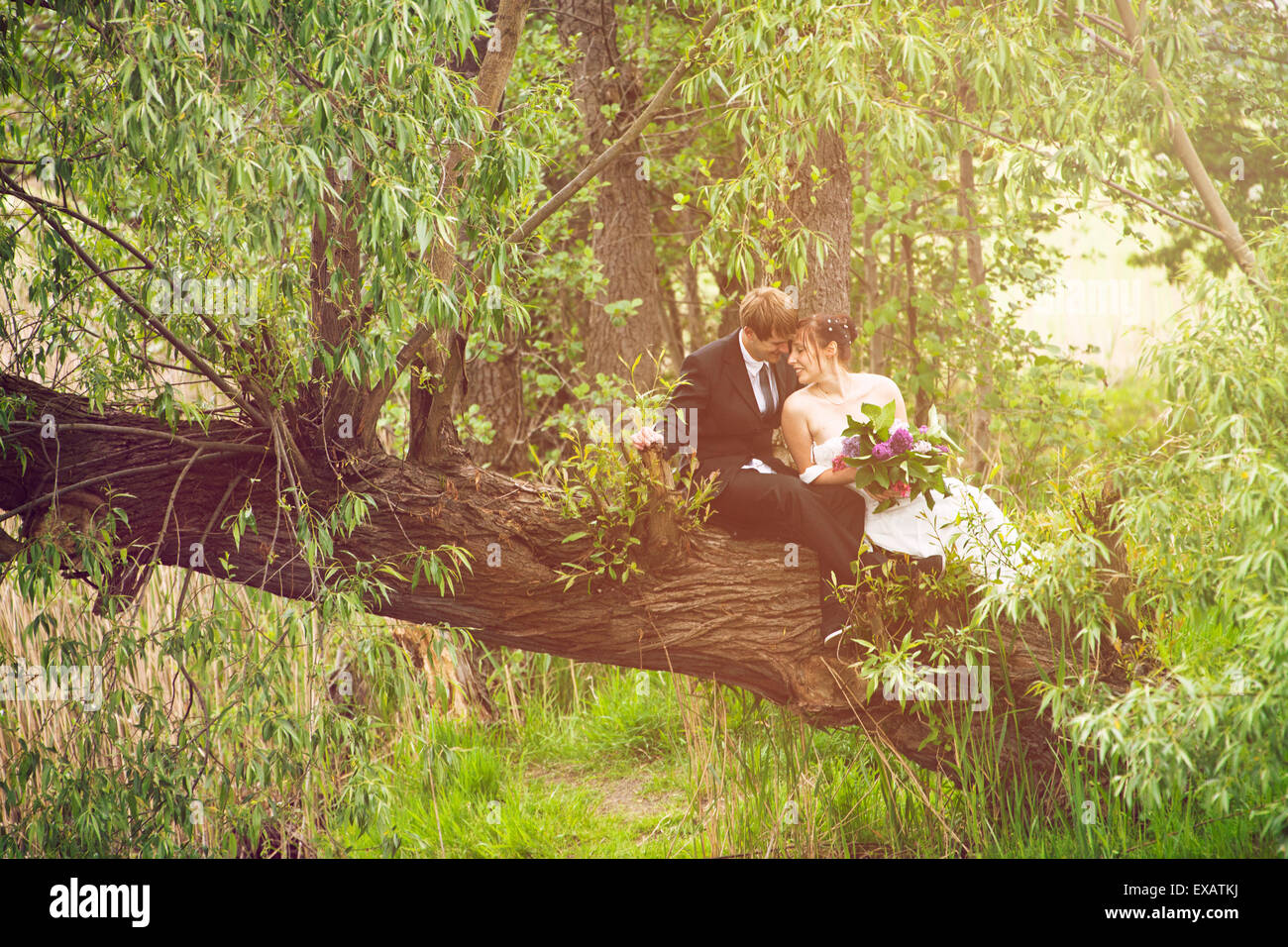 Bride and groom sitting fallen in love on a tree, - Stock Image