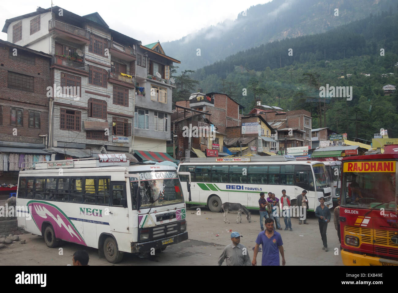 Donkey standing by bus stand in the popular tourist town of Manali, Himachal Pradesh, India - Stock Image