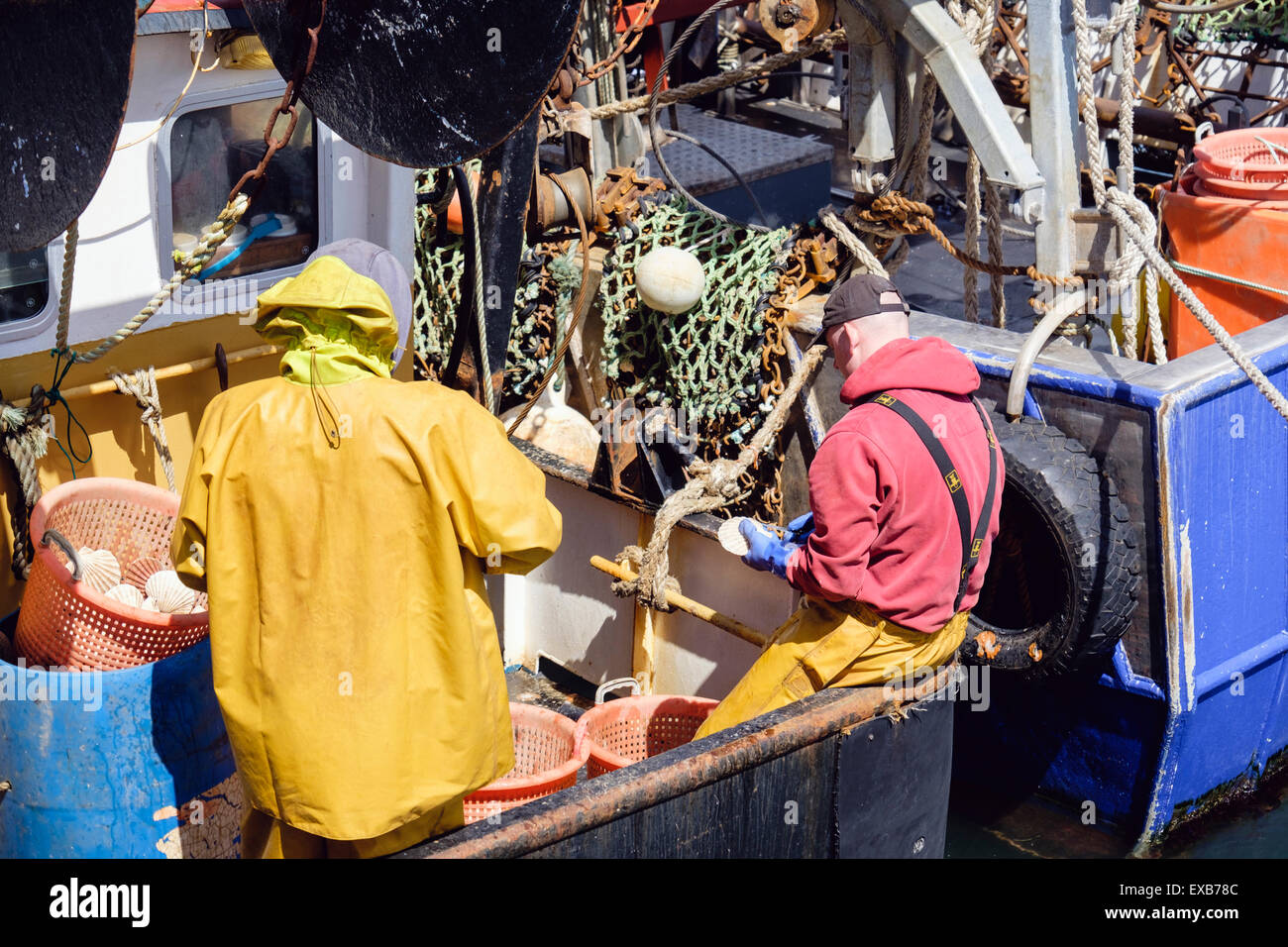 Fishermen in a fishing boat opening Scallop shells to remove fresh Scallops. Port Ellen Isle of Islay Hebrides Western - Stock Image