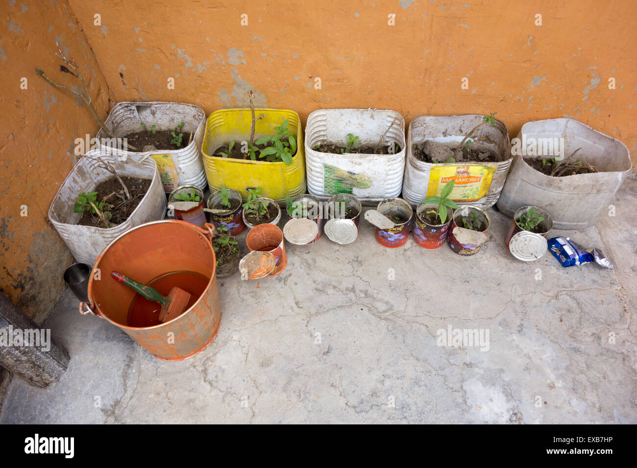 Key Monastery (or Kee, Ki, Kye), Spiti Valley, India - growing plants in containers and orange paint inside the - Stock Image