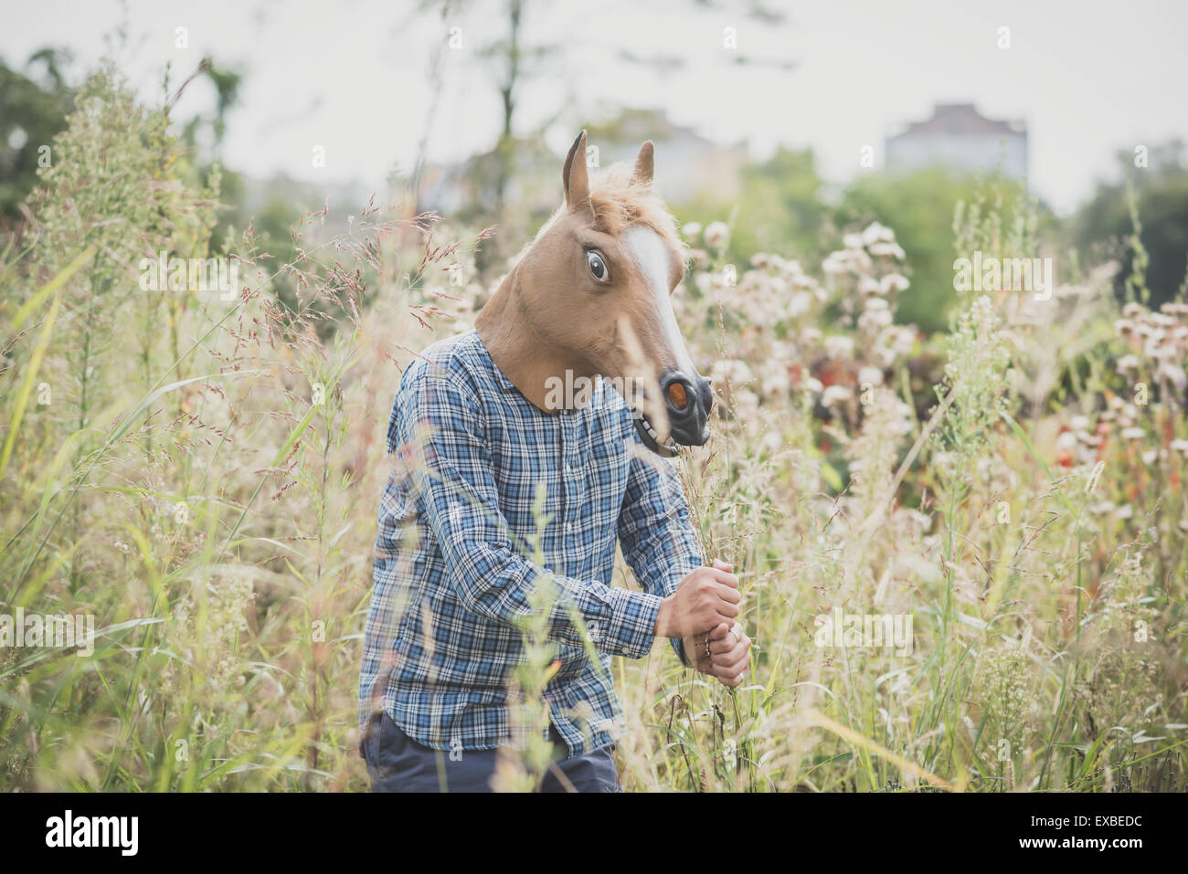 horse mask absurd man in the grass - Stock Image