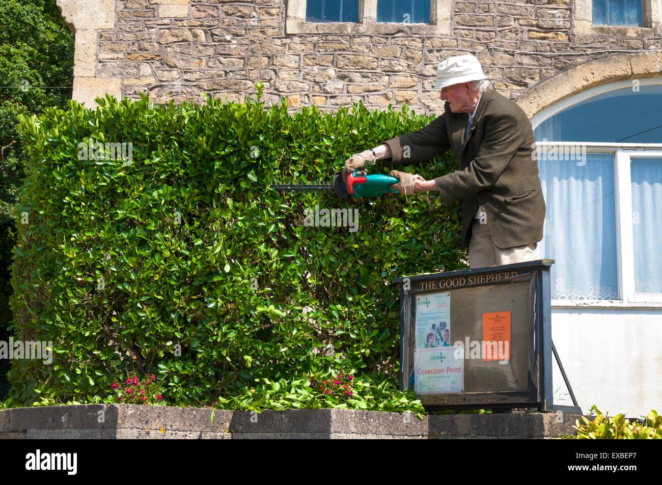 Elderly senior man trims a hedge - Stock Image