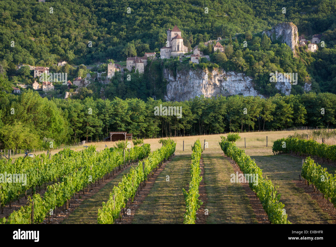 Evening view over vineyard of medieval town of Saint-Cirq-Lapopie, Midi-Pyrenees, France - Stock Image
