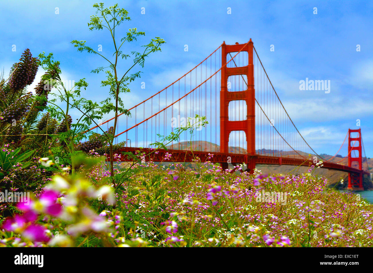 Flowers blussoome at the Golden Gate Bridge in San Francisco, CA.Frommers travel guide considers Golden Gate Bridge - Stock Image