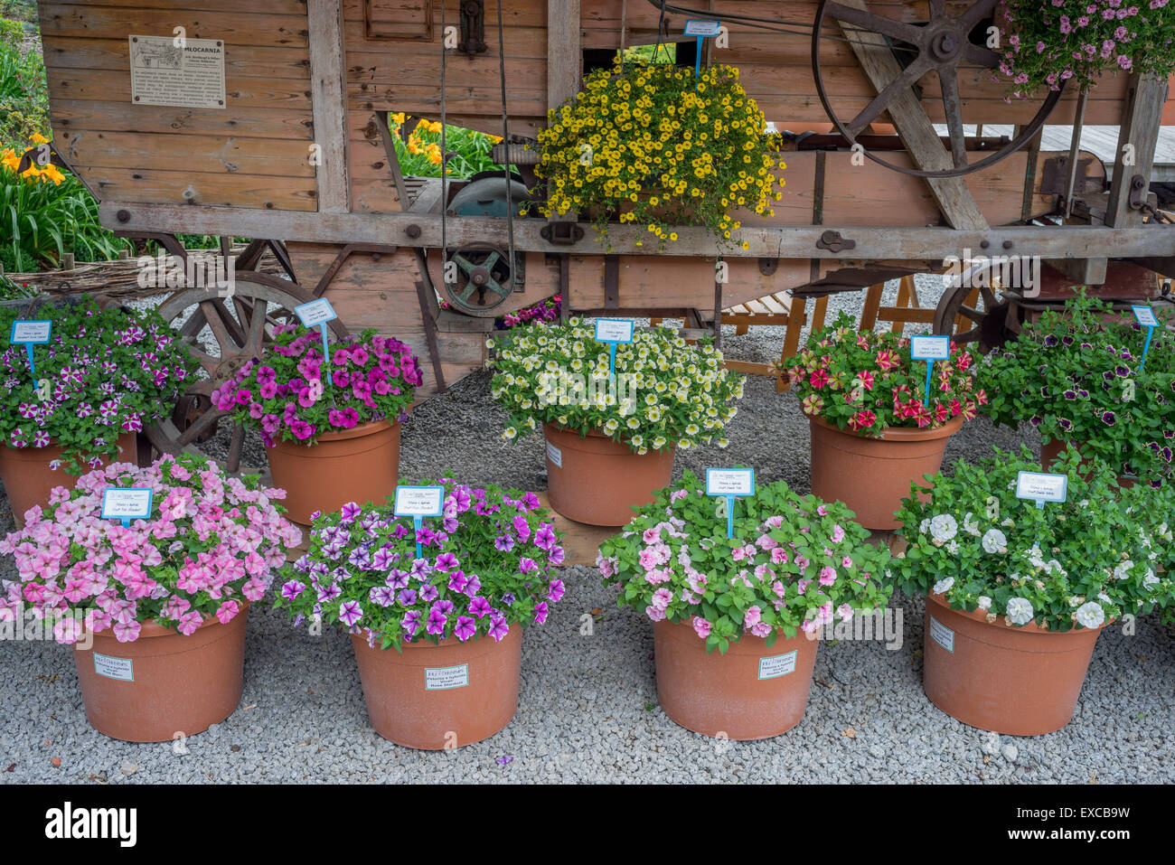 Arrangement Of Flower Pots High Resolution Stock Photography And Images Alamy