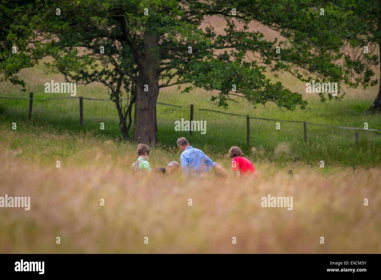 Families enjoying nature in a summer field, Yorkshire, UK - Stock Image