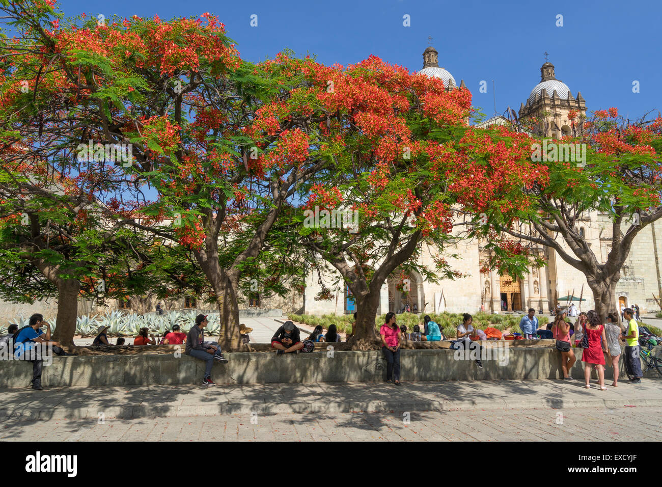 People relaxing in the shade of the trees in front of the Santo Domingo Church in Oaxaca Mexico - Stock Image