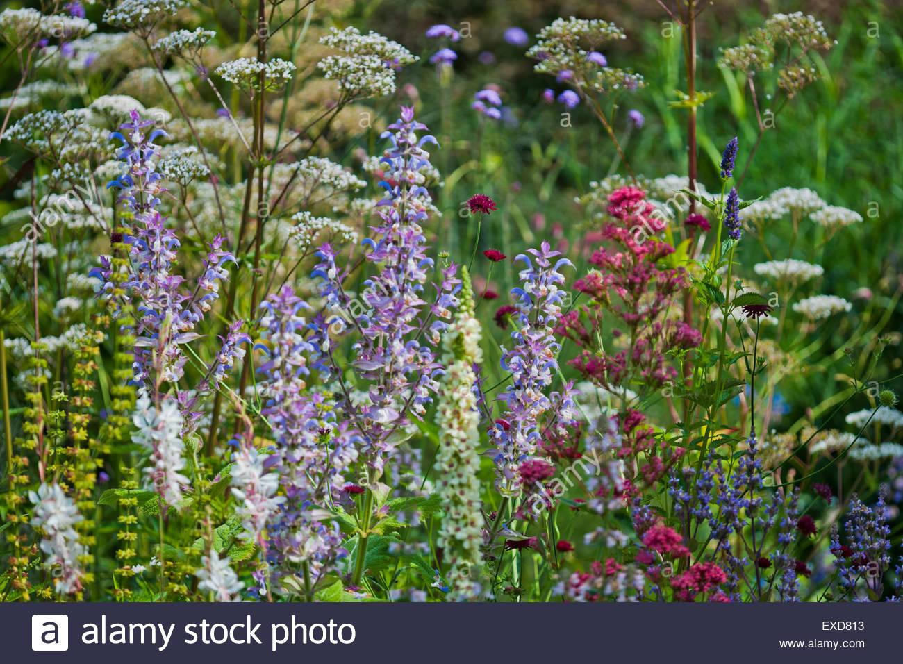 Mixed border perennials - Stock Image