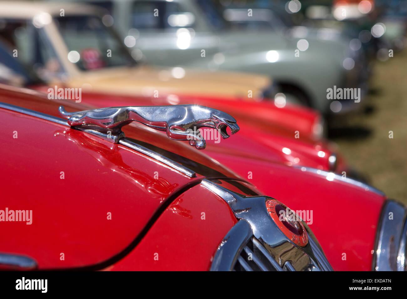 Jaguar Car Emblem   Stock Image