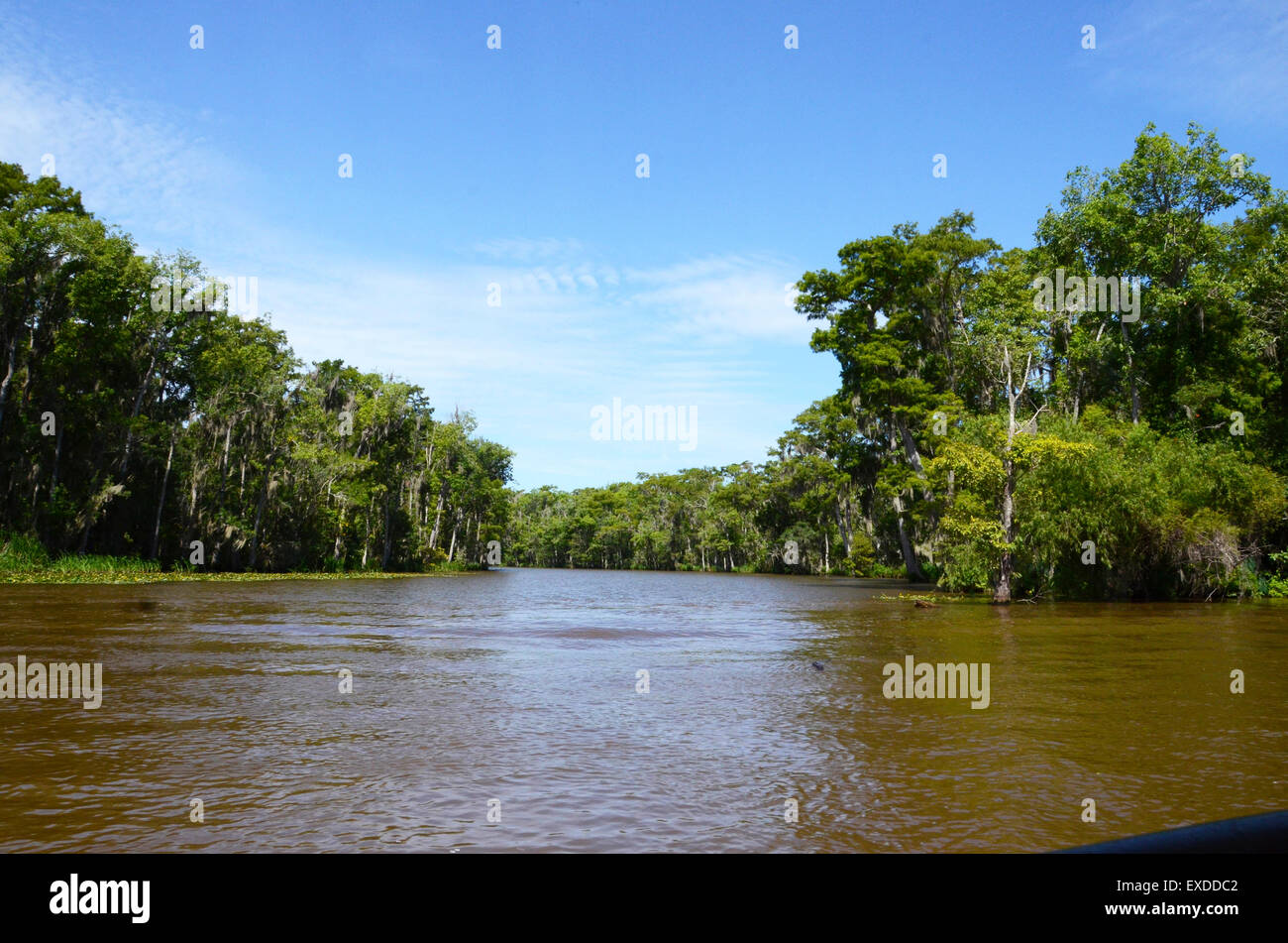 swamp louisiana pearl river bayou new orleans - Stock Image
