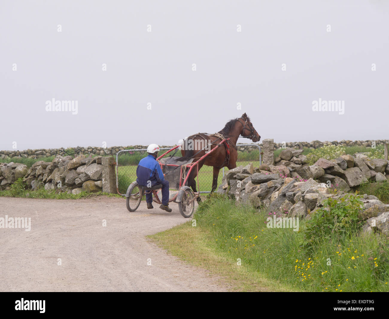 Jaeren Norway, flat agricultural landscape, fog, dirt road between stonewalls, trotting practice underway - Stock Image