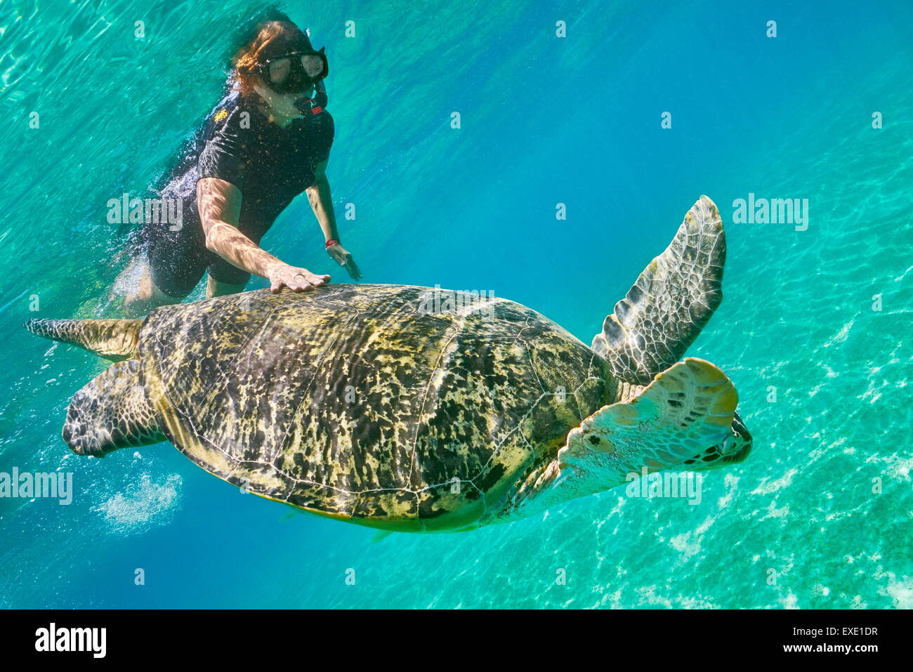 Underwater view at Green Sea Turtle and a young woman, Marsa Alam, Abu Dabbab Bay, Red Sea, Egypt - Stock Image