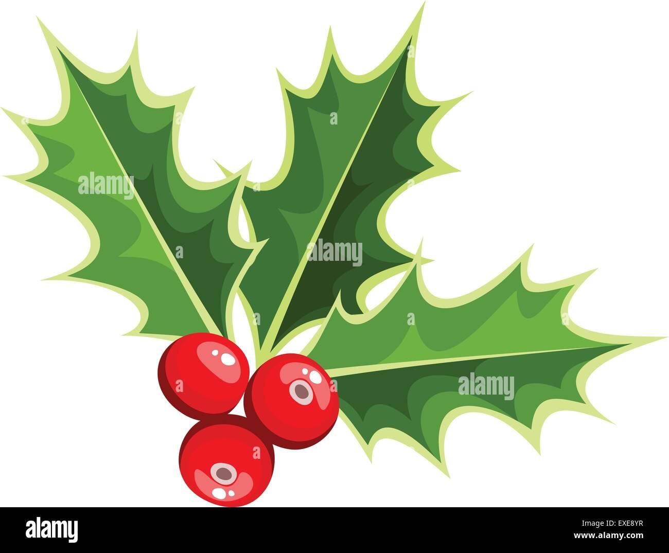 Christmas Holly Vector.Christmas Holly Vector Illustration Stock Vector Art