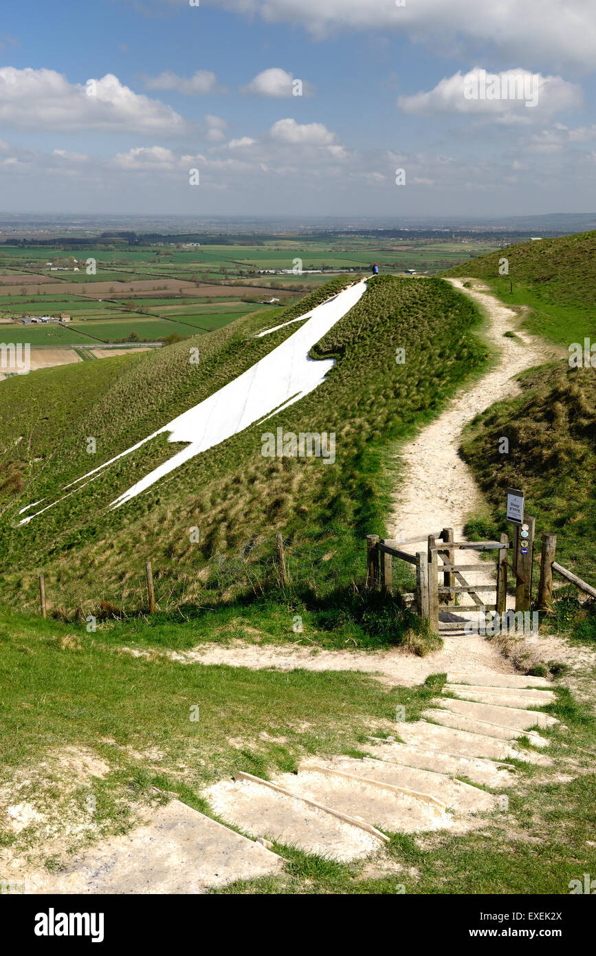 Westbury white horse (Bratton Camp hillfort). Stock Photo
