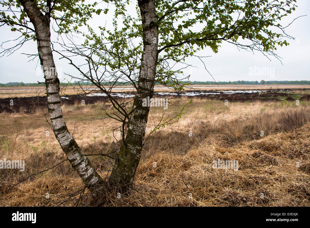 Europe, Germany, Lower Saxony, the moor Teufelsmoor near the village Teufelsmoor in the district Osterholz.  Europa, Stock Photo