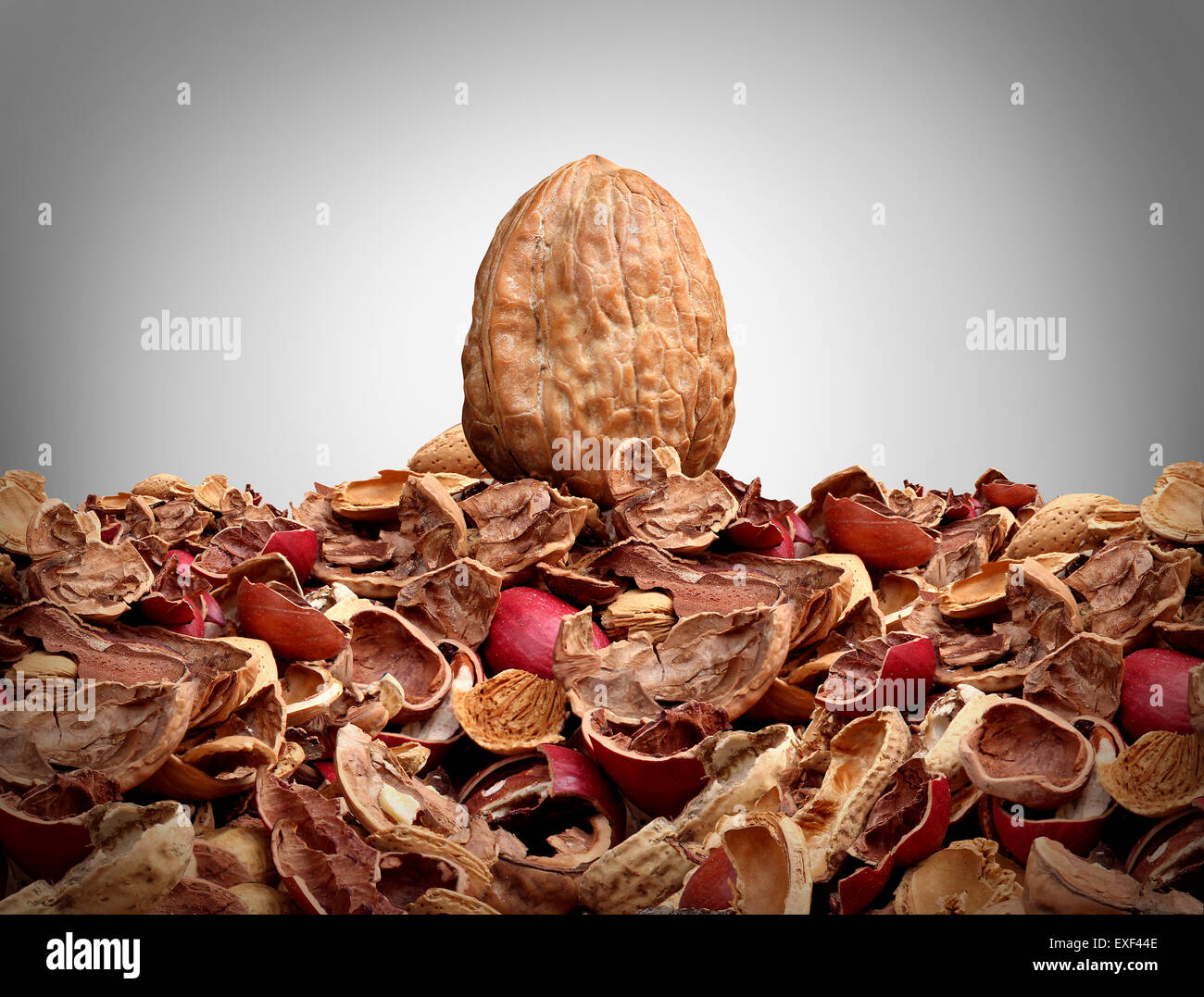 Tough nut to crack business concept as a solid hard closed walnut on top of a mountain of broken nut shells as a - Stock Image