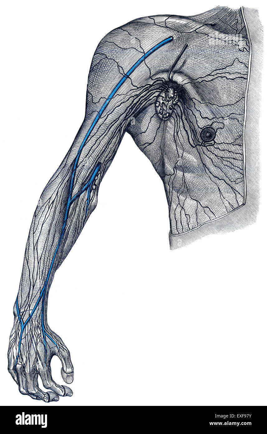 Lymphatic vessels, - Stock Image