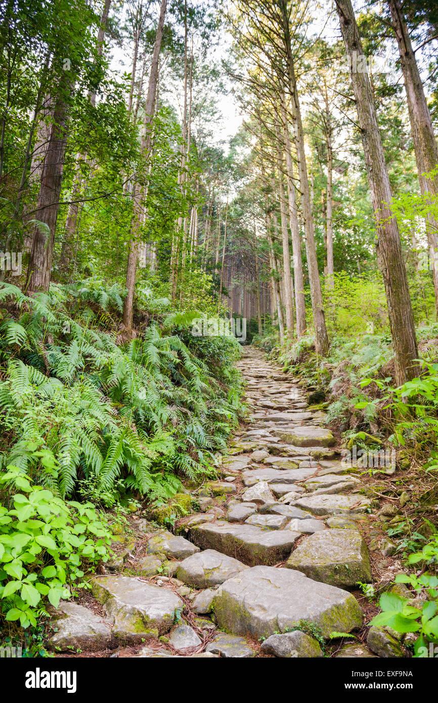 Matsumoto Pass on the Kumano Kodo, a sacred trail and World Heritage site  near Kumano City, Japan. - Stock Image