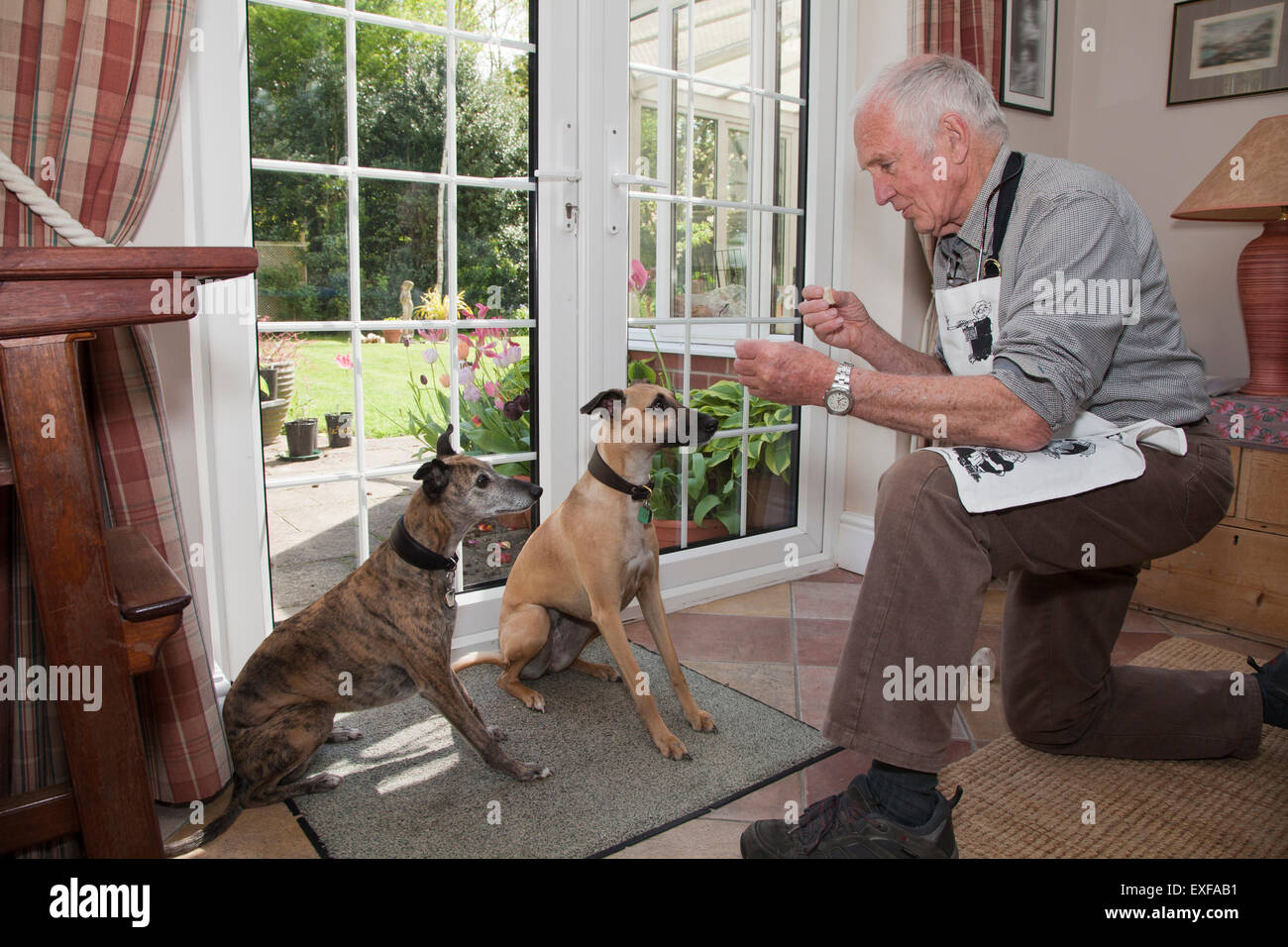 Senior man teaching pet dogs to sit and wait for treats - Stock Image