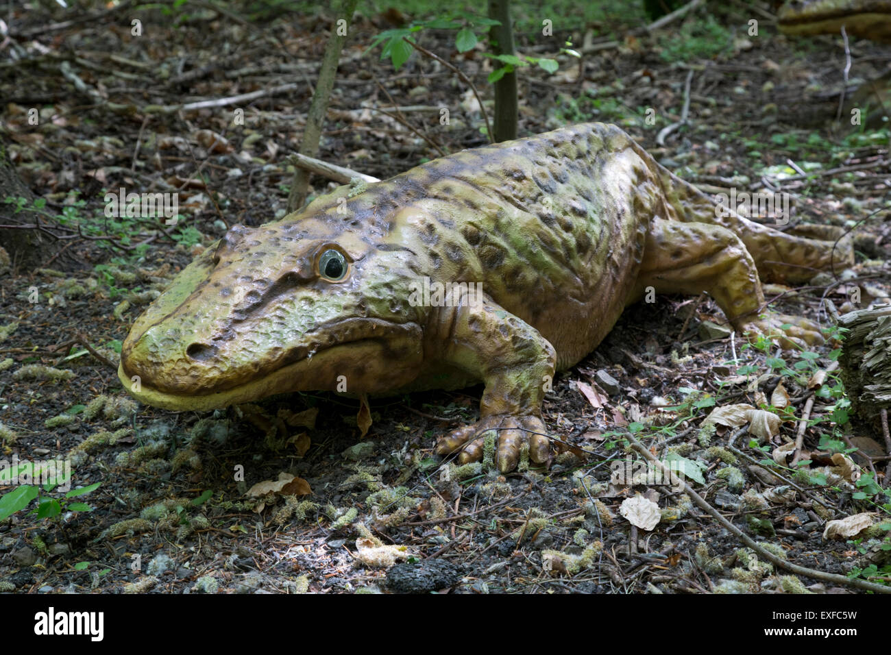 Image result for images of eryops