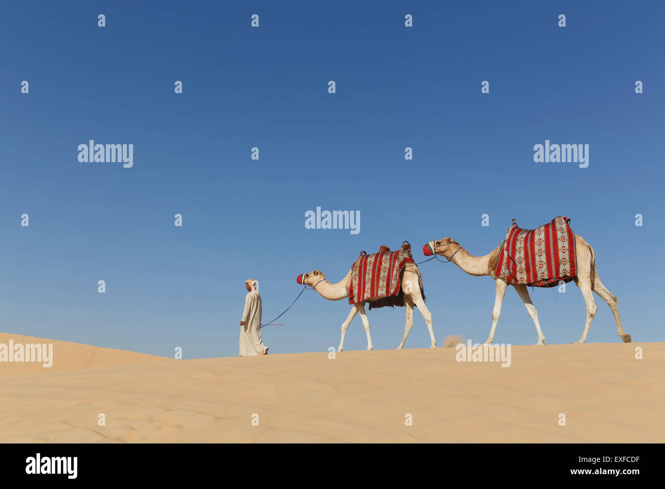 Bedouin walking with two camels in desert, Dubai, United Arab Emirates Stock Photo