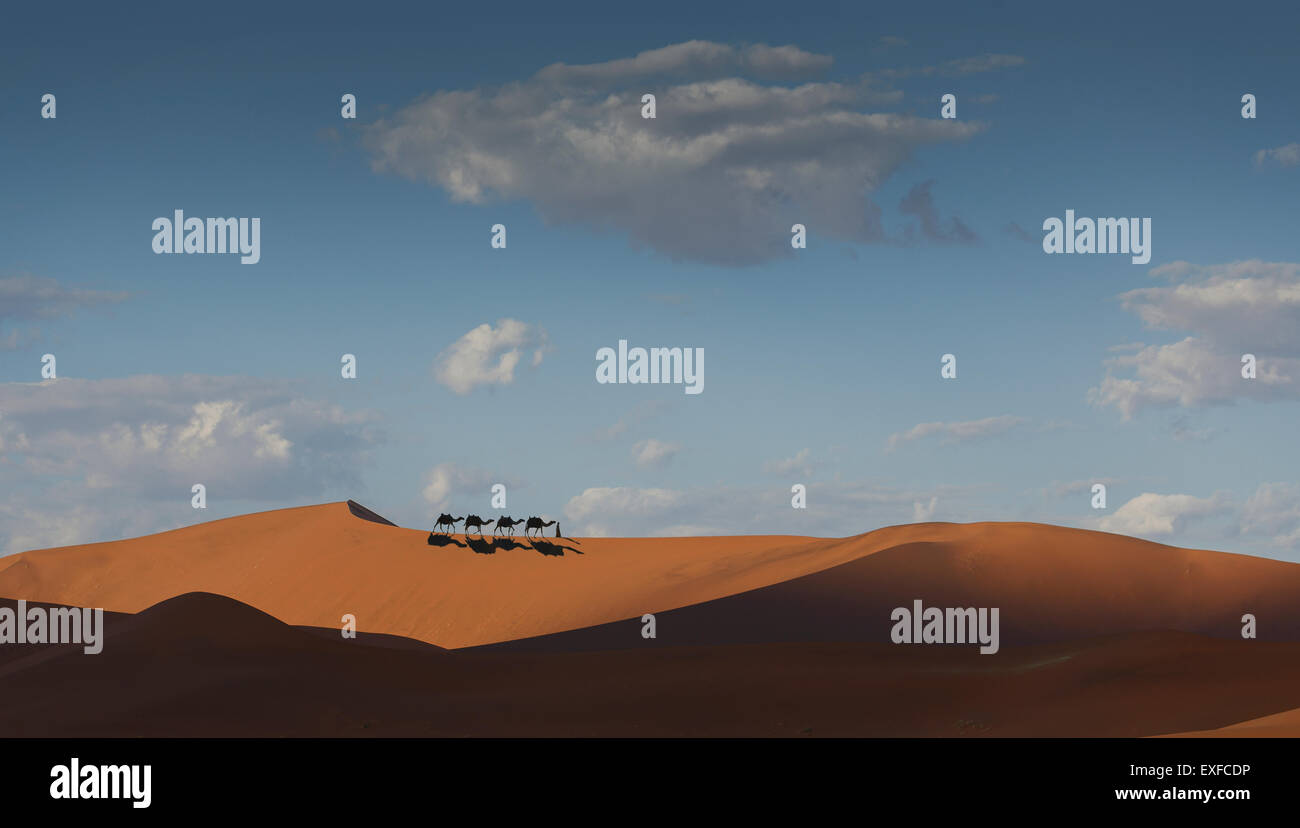 Camel caravan on desert horizon, Dubai, United Arab Emirates - Stock Image