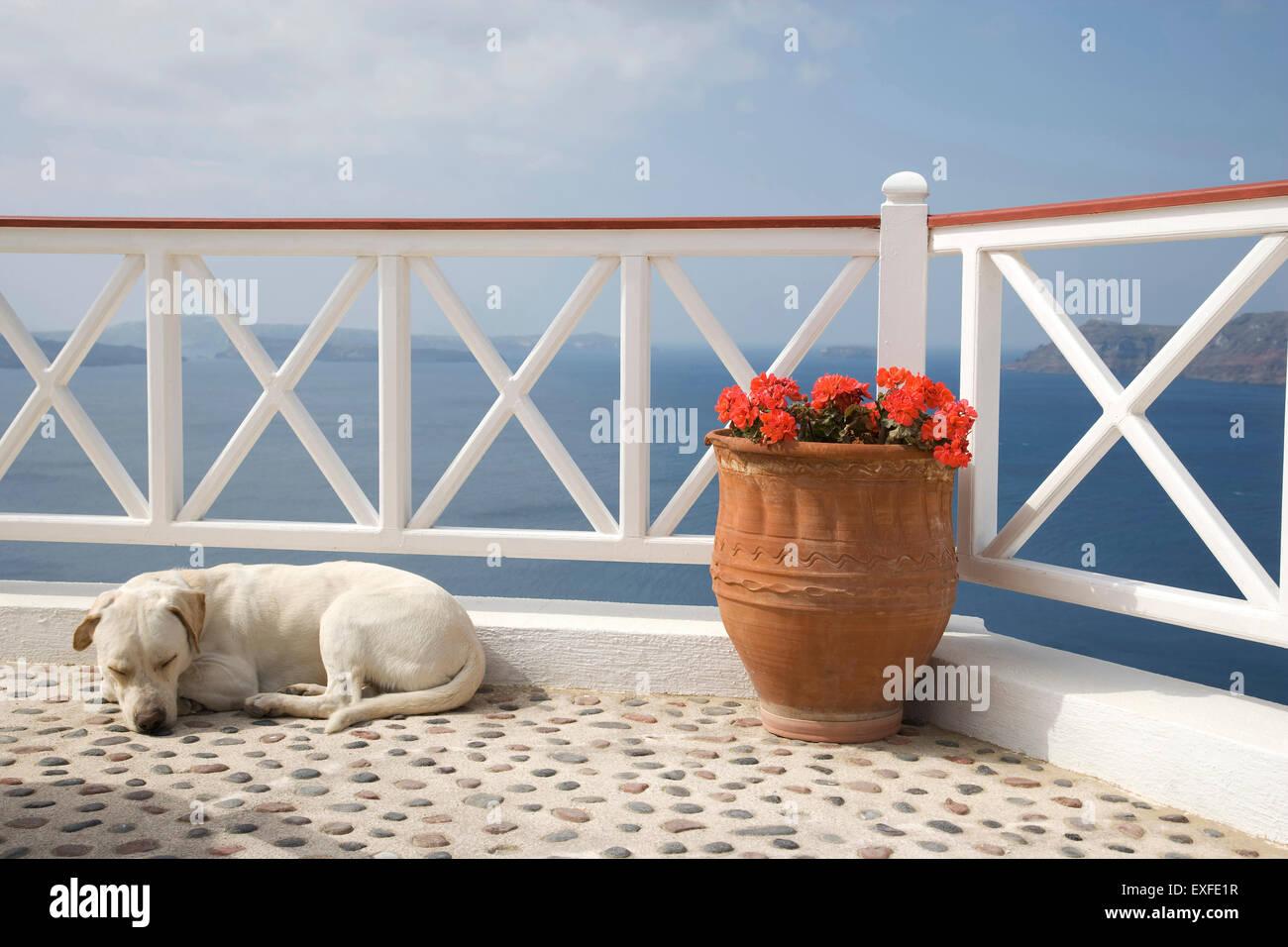 Dog sleeping on balcony with sea view, Oia, Santorini, Cyclades, Greece - Stock Image