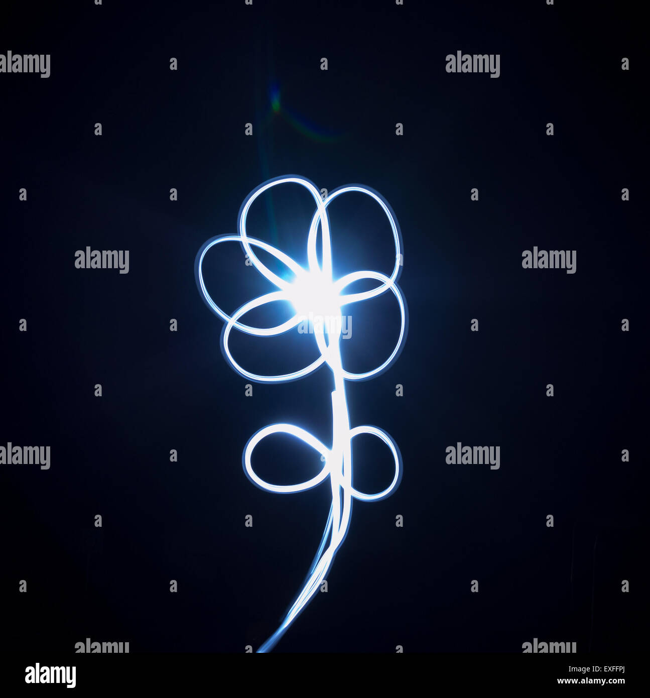 Single flower painted in blue light in the darkness - Stock Image