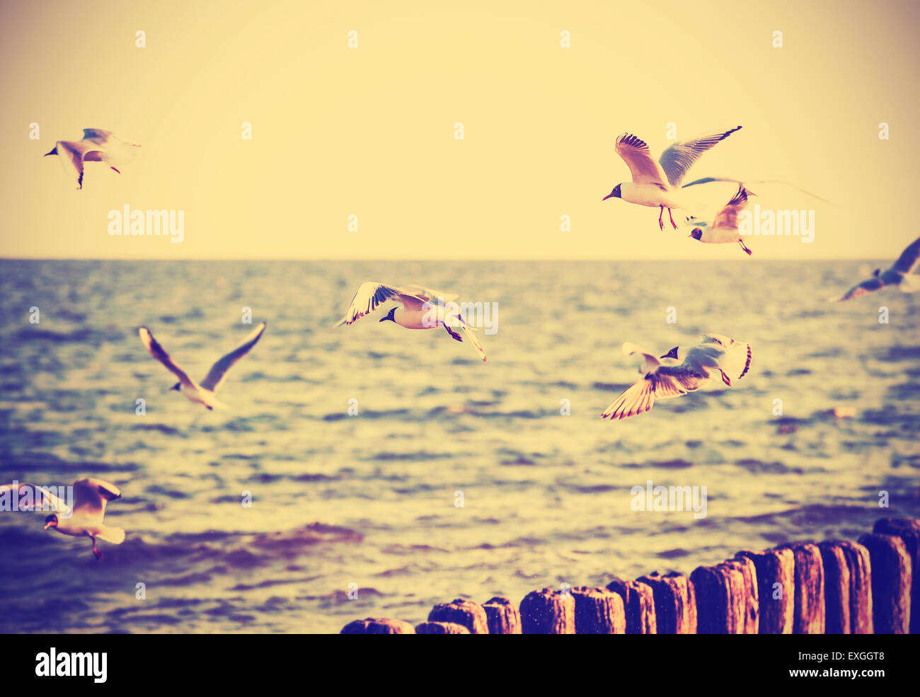 Vintage retro filtered birds on the sea, nature background, old film effect. - Stock Image