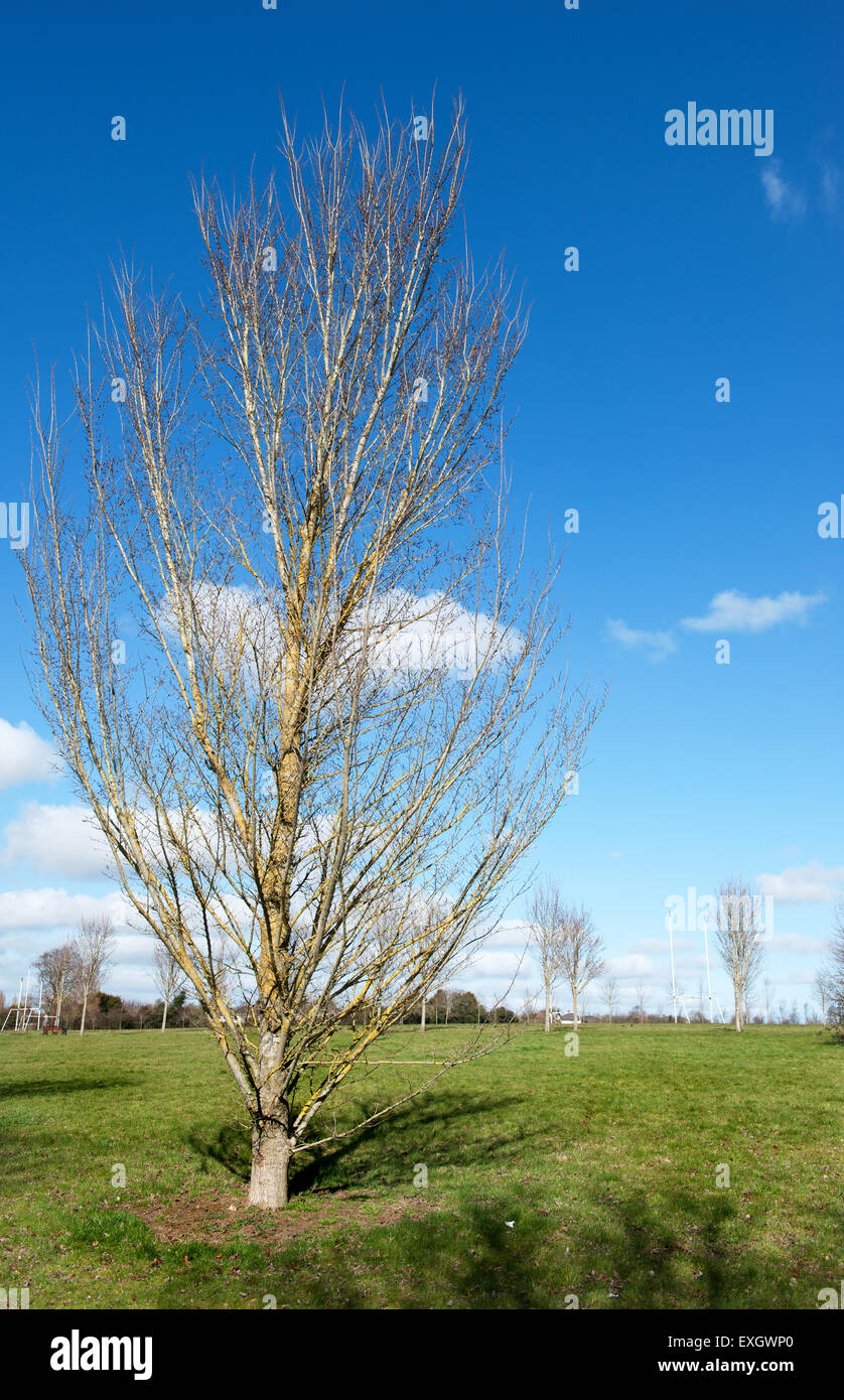 Spring Lawn and Tree for background - Stock Image