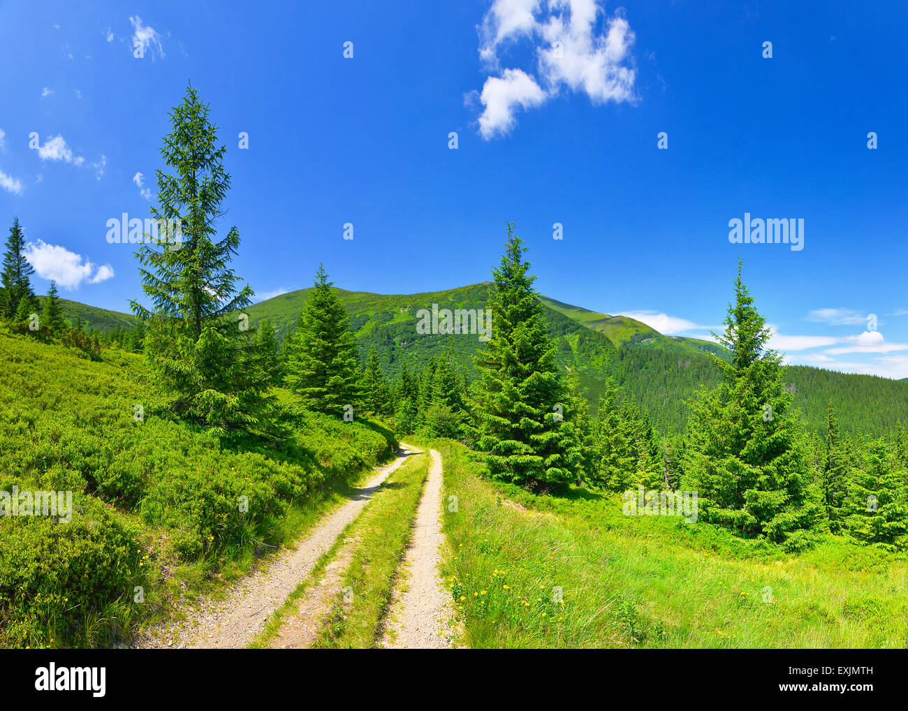 Country road and alpine meadow in summer highland. - Stock Image