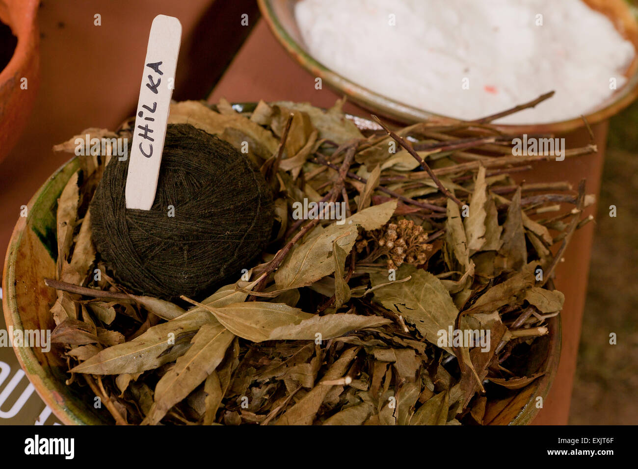 Chil Ka, Peruvian plant used in natural dyeing process of yarn - Stock Image