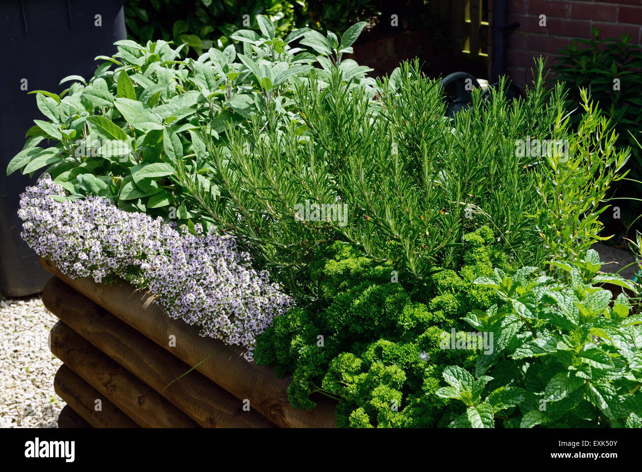 Raised Bed For Culinary Herbs Mint Curly Leaf Parsley Rosemary