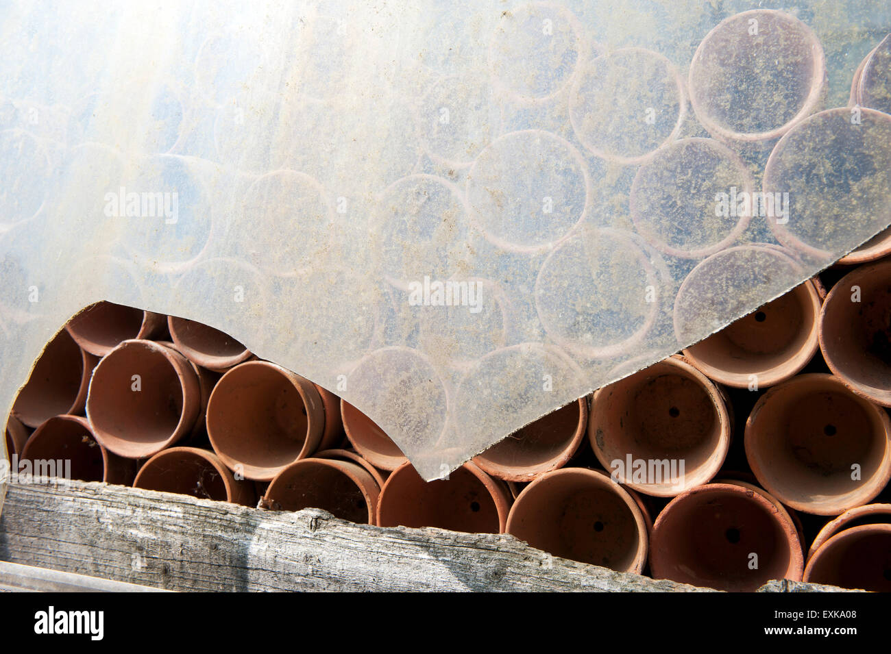Clay pots in green house - Stock Image