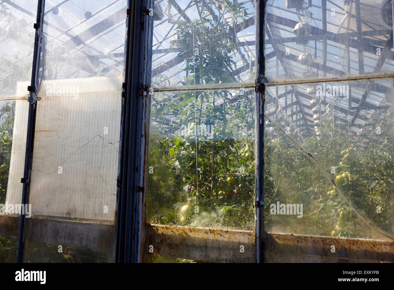 illuminated greenhouses heated by geothermal energy for growing tomatoes indoor farm Hveragerdi iceland - Stock Image