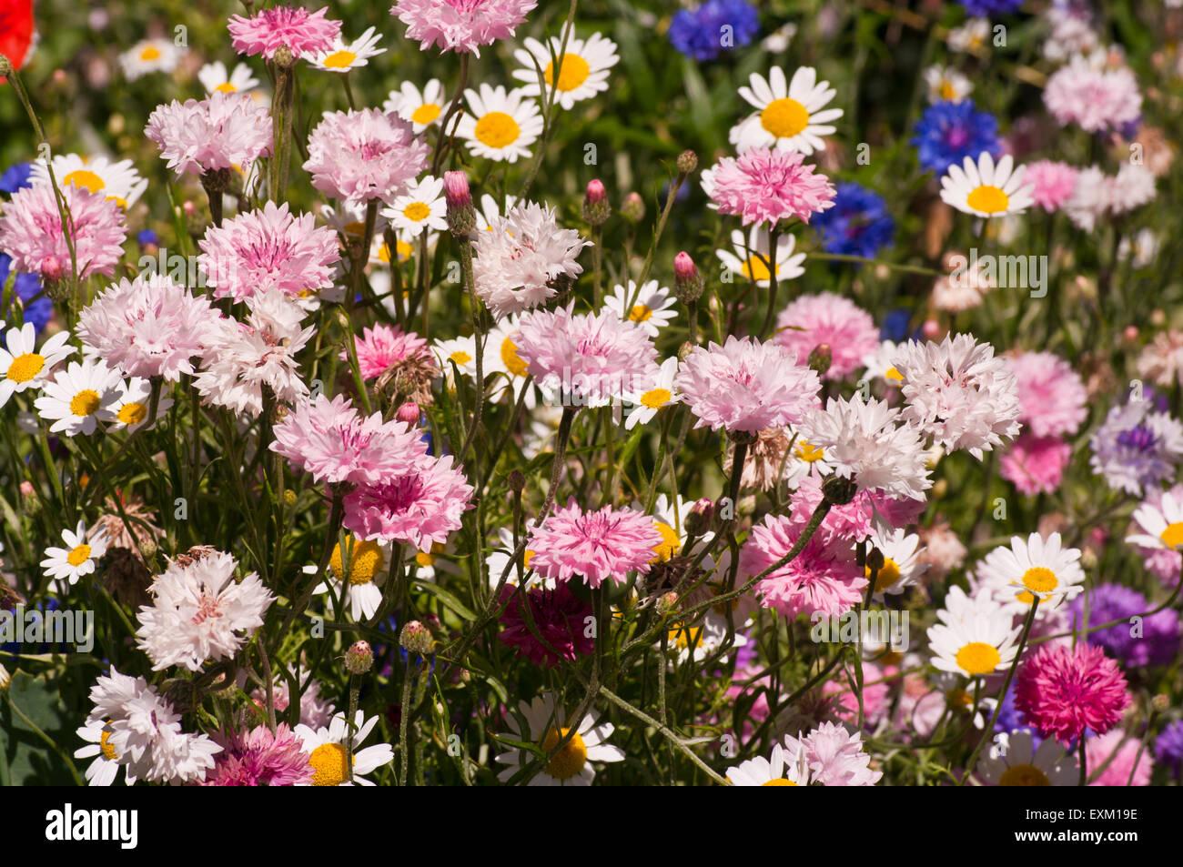 English Cottage Garden Flowers Stock Photos & English Cottage Garden ...