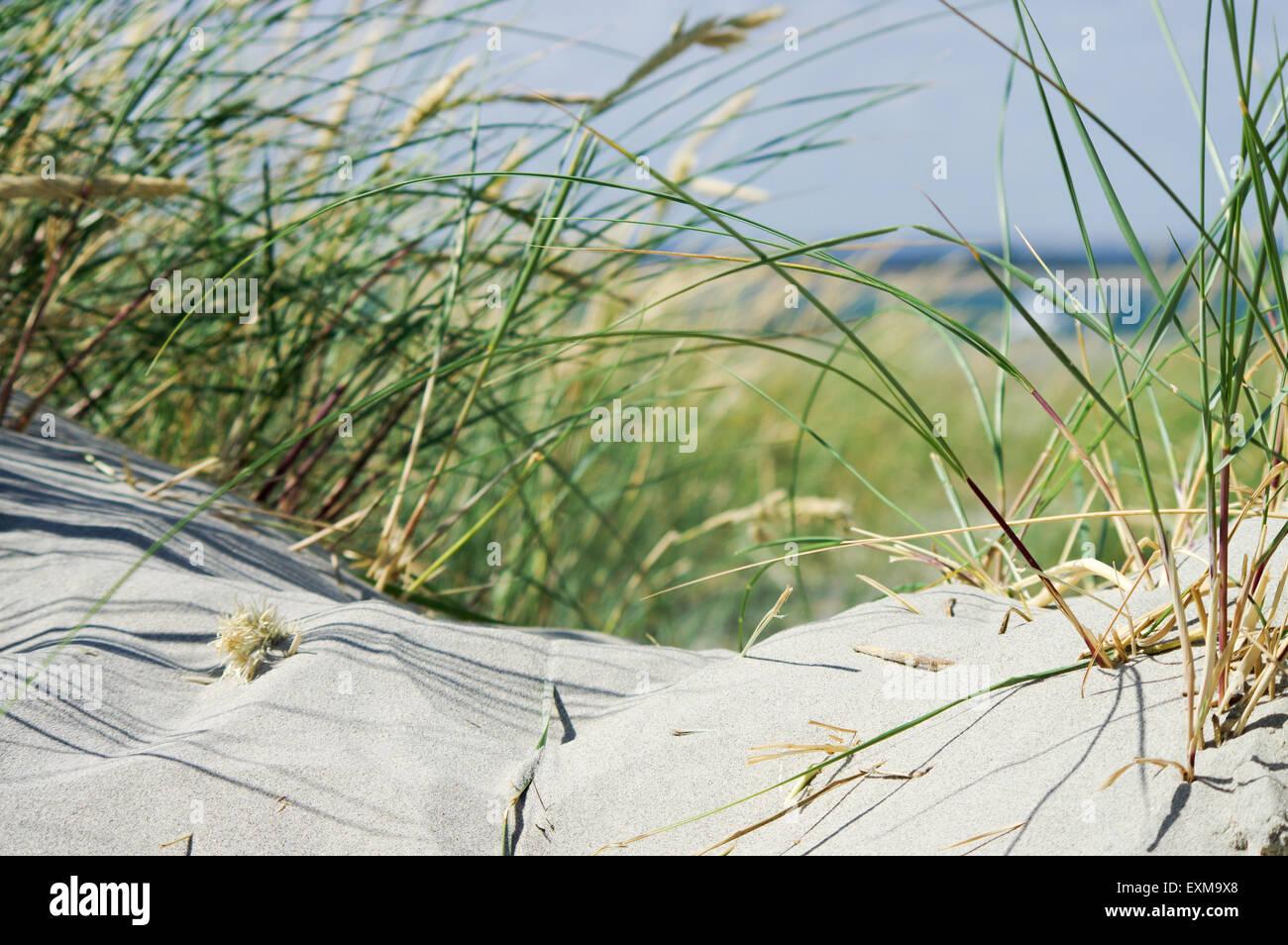 Beside the seaside - East Head, West Wittering - Stock Image