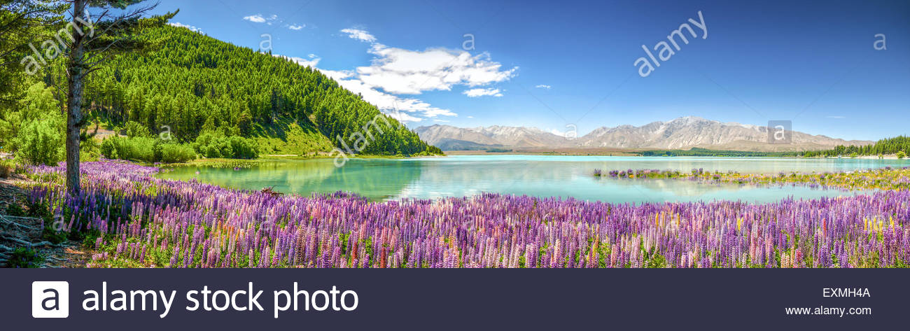 Lake Tekapo Canterbury 7999, New Zealand - Stock Image