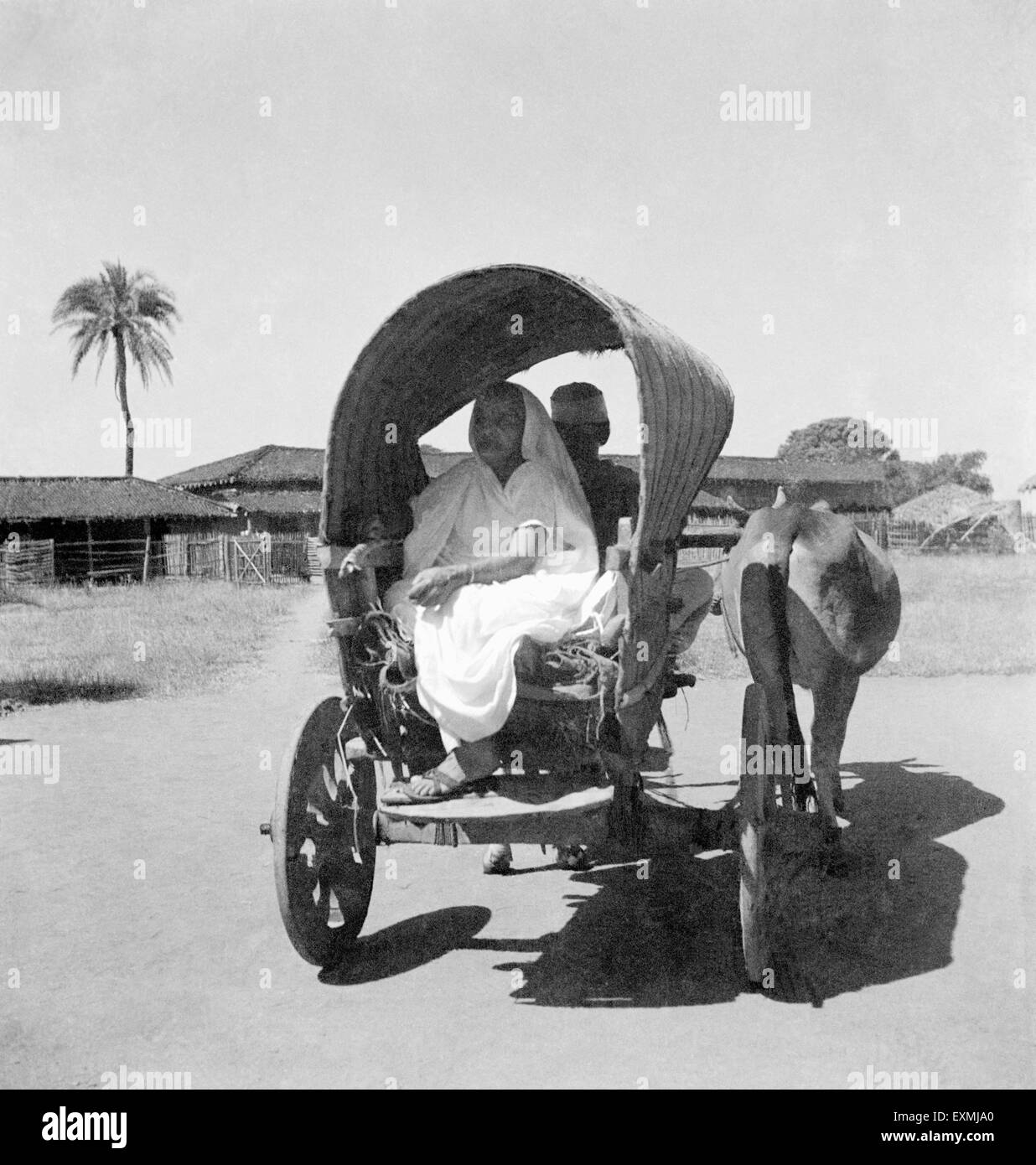 Kasturba Gandhi going in a bullock cart to meet her son Harilal's son in law Kuvarji Parekh at Sevagram Ashram - Stock Image