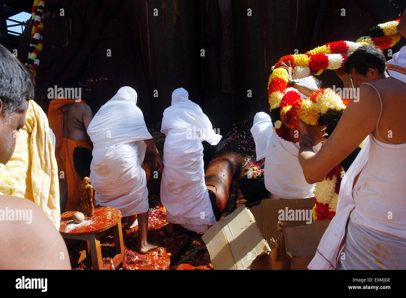 Jain sadhavis touch foot 57 feet statue of lord Bahubali Gomateshvara Mahamasthakabisheka celebration Sravanabelagola - Stock Image