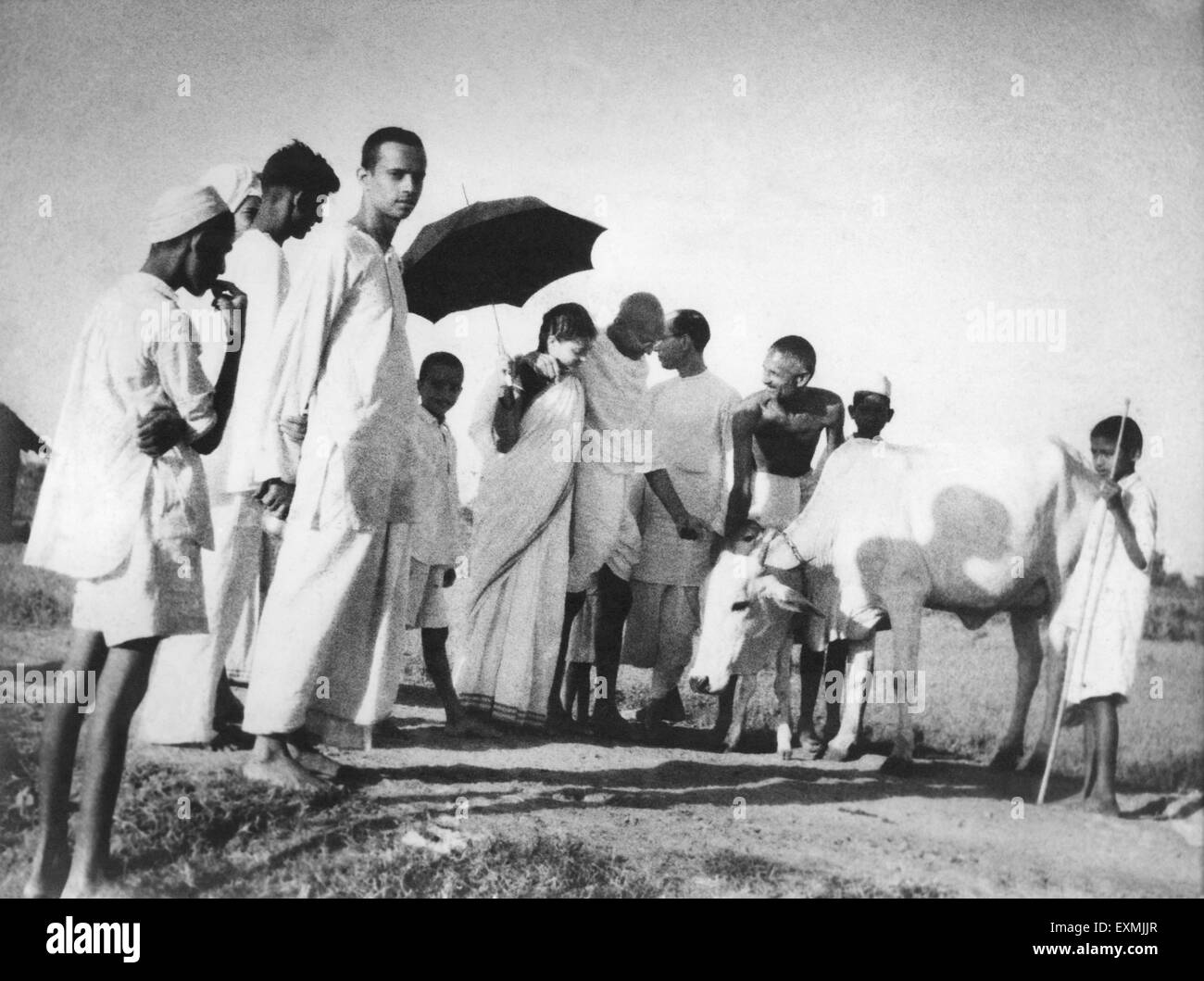 Balwant Singh presents a newborn four hours old calf to Mahatma Gandhi and others at Sevagram Ashram - Stock Image