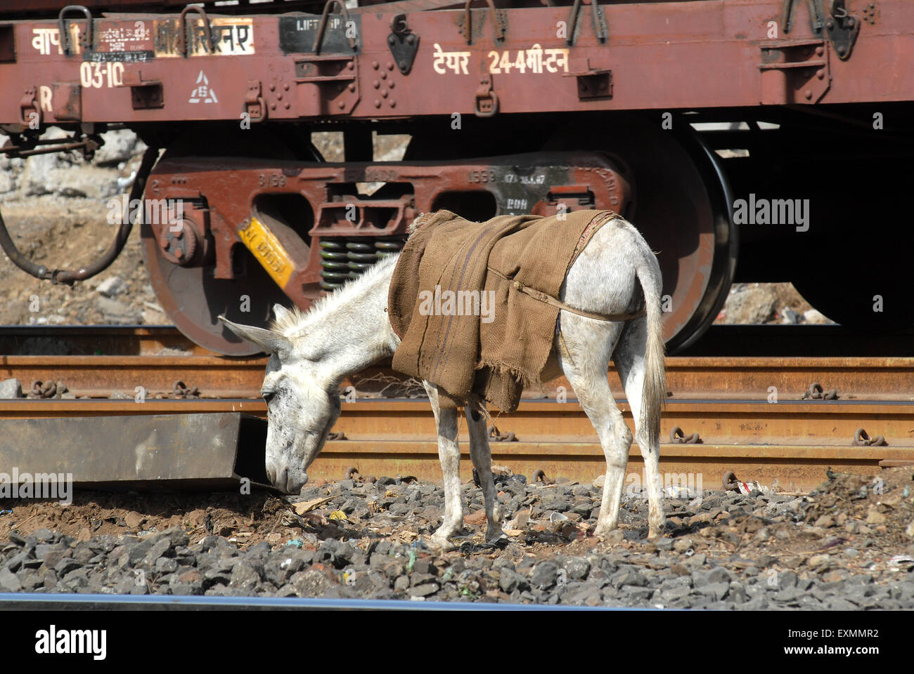 Labourers employ donkeys to remove debris from the railway tracks near Sewri railway station in Mumbai - Stock Image