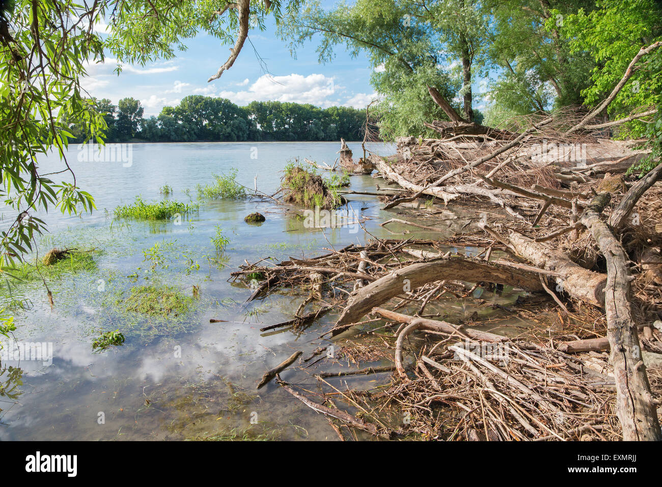 Alluvial wood on the waterfront of Danube in National park  Donau-Auen in Austria. Stock Photo