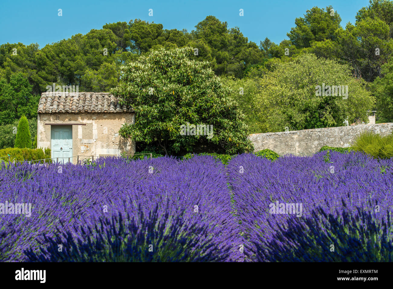Lavender field with cottage stone, Provence, France - Stock Image