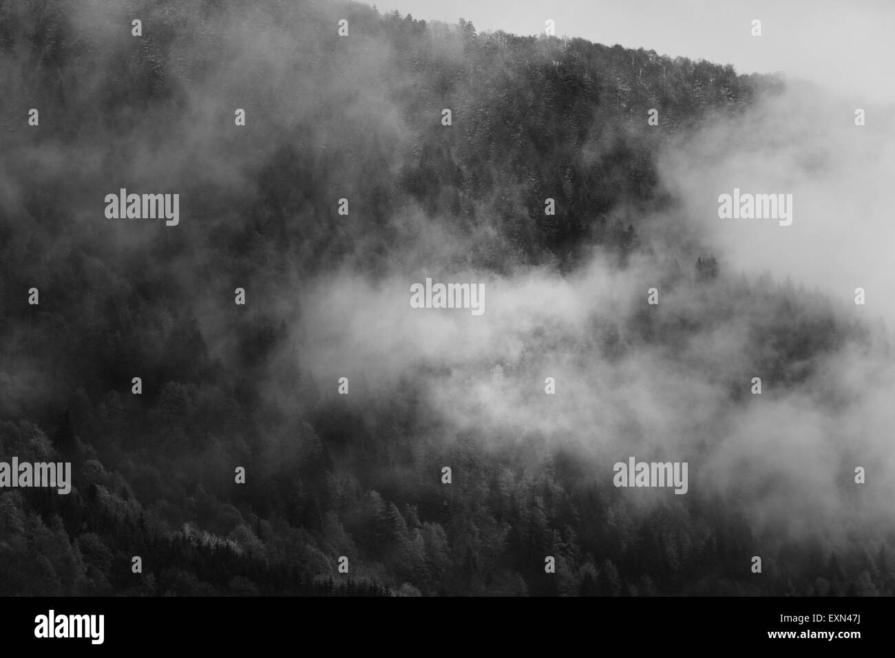 Clouds over a pine forest in the Bauges mountains near Chambery, French Alps. - Stock Image